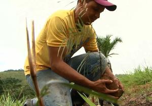 Vídeo - No Dia Mundial do Meio Ambiente, prioridade é restaurar os recursos naturais