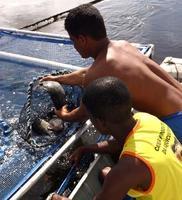 Coopemar comemora a exportação de 2,2 toneladas de tilápia para a França
