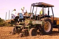 Produtividade da mandioca no Baixo Sul atinge índice recorde de 35,6 toneladas por hectare.